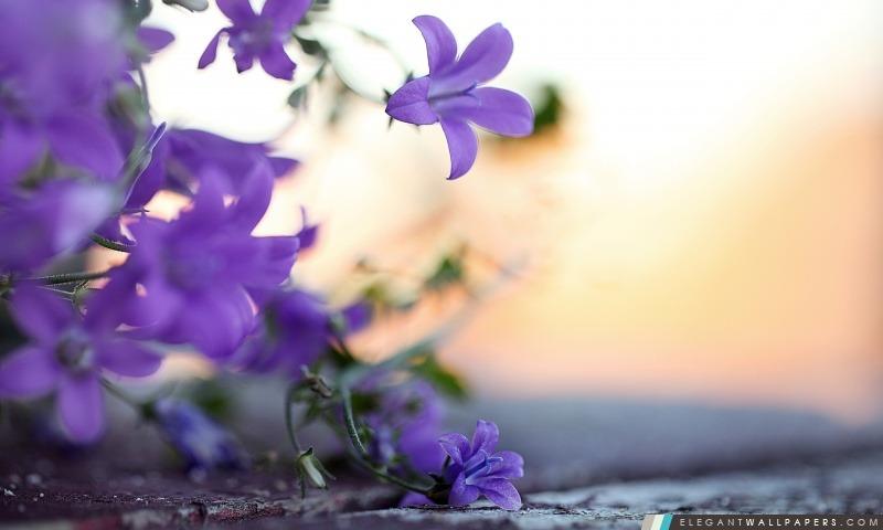 Petites fleurs violet, Arrière-plans HD à télécharger