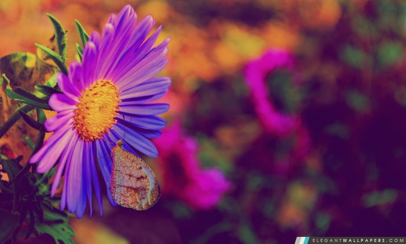 Fleur pourpre, Arrière-plans HD à télécharger