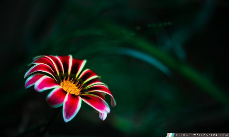 Fleur avec des pétales rouges, Arrière-plans HD à télécharger