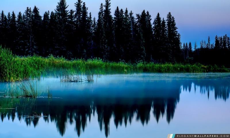 Misty Lac Et Forêt Noire, Arrière-plans HD à télécharger