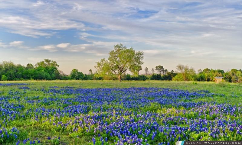 Fleurs bleues terrain, Arrière-plans HD à télécharger