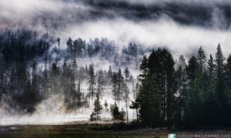 Forêt brumeuse, Arrière-plans HD à télécharger