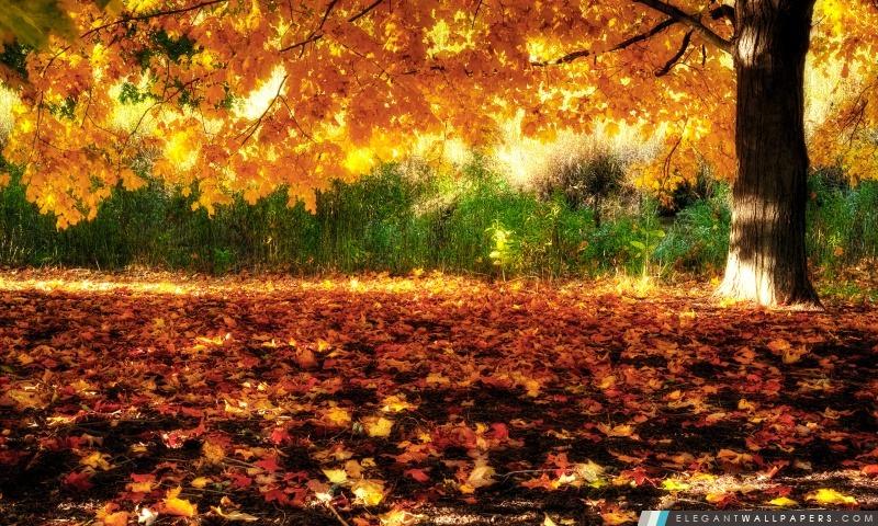 Golden Tree, Arrière-plans HD à télécharger