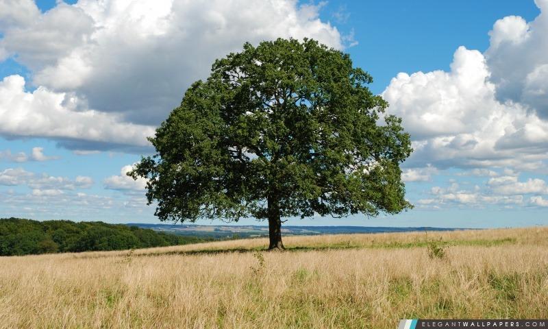 Un seul arbre, Arrière-plans HD à télécharger