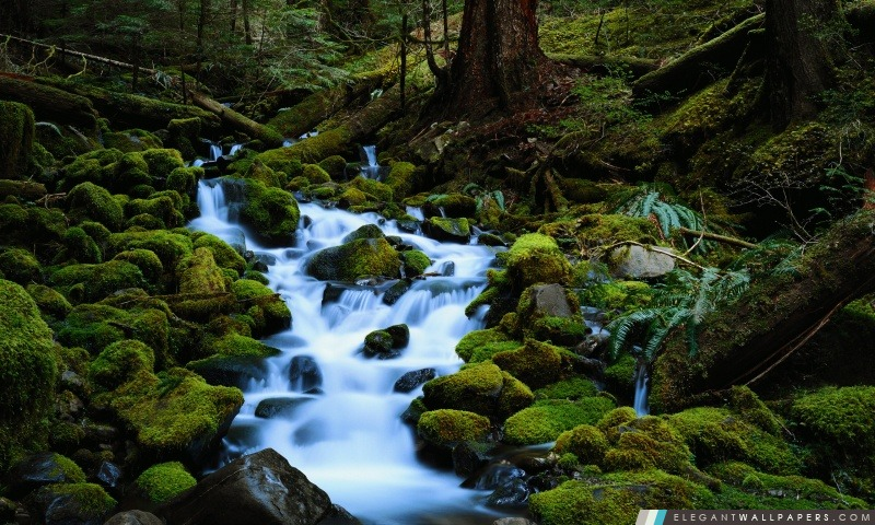 Forest Stream, Arrière-plans HD à télécharger
