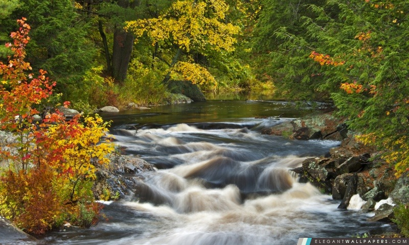 Roseau River, région de Muskoka, en Ontario, Arrière-plans HD à télécharger