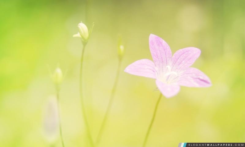 Violet minuscule fleur, Arrière-plans HD à télécharger