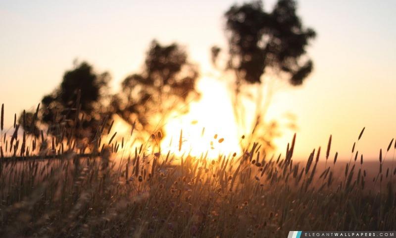 Les mauvaises herbes sur le terrain, Arrière-plans HD à télécharger