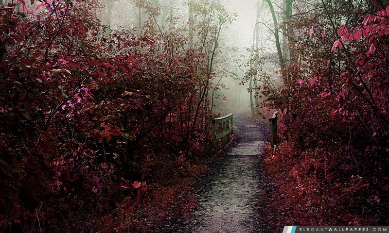 Autumn Mist chemin, Arrière-plans HD à télécharger