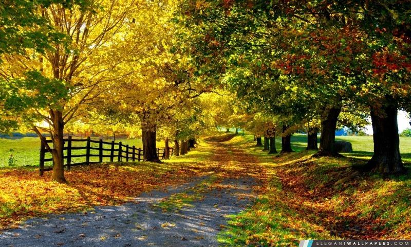 Le plus beau automne, Arrière-plans HD à télécharger