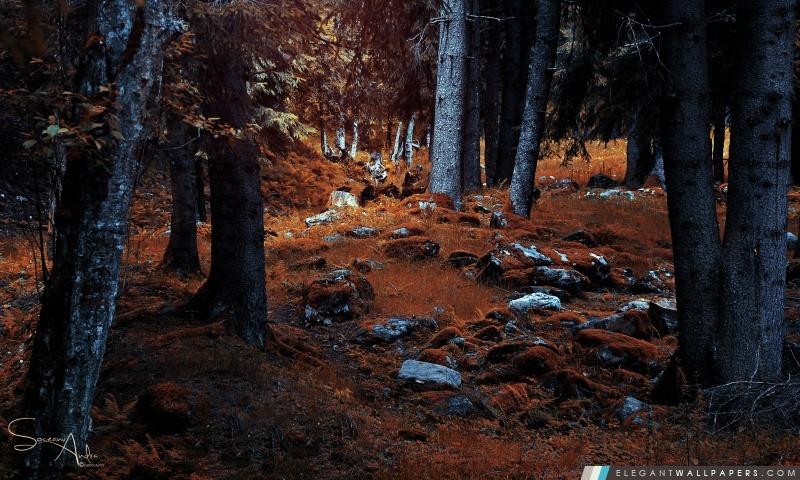 Forêt, Arrière-plans HD à télécharger