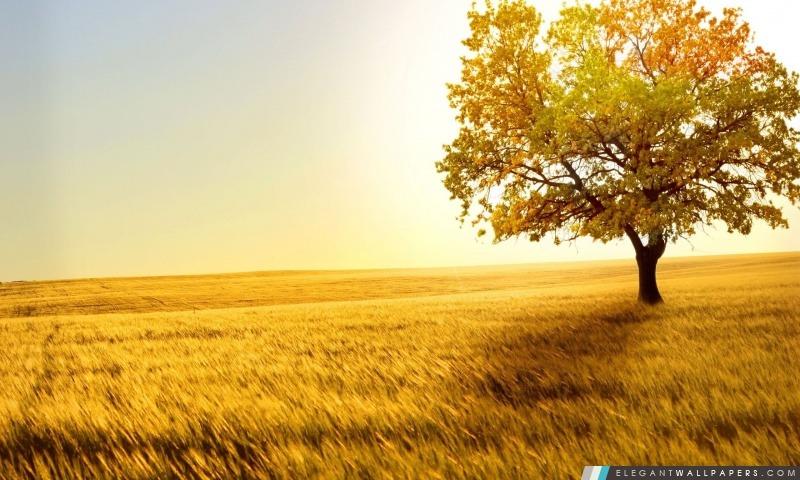 Nature Paysage Arbres champs, Arrière-plans HD à télécharger