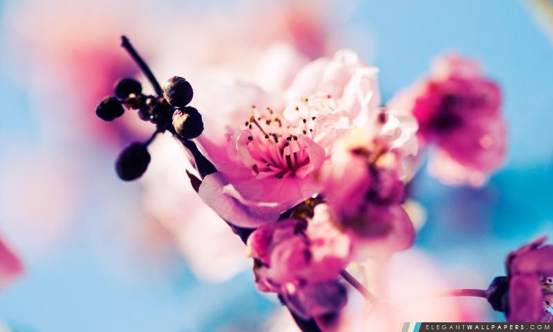 Début du printemps, Arrière-plans HD à télécharger