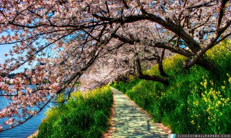 Cherry Blossom Tunnel, Arrière-plans HD à télécharger