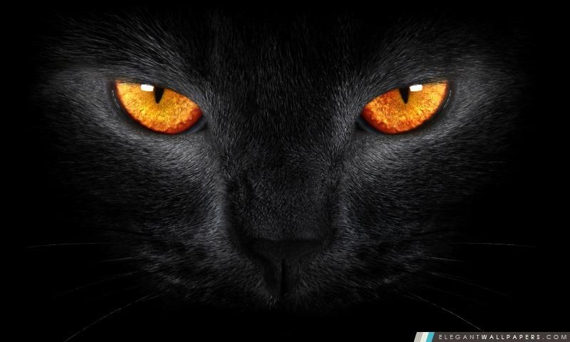 Black Cat, Arrière-plans HD à télécharger