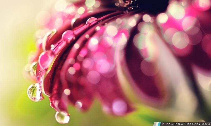 Bokeh Drops & Fleur, Arrière-plans HD à télécharger