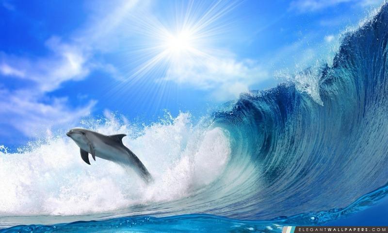 Jouer Dolphin, Arrière-plans HD à télécharger