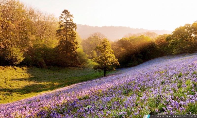 Fleurs violettes, Arrière-plans HD à télécharger