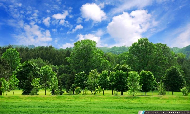 Beau Paysage D'été. Fond D'écran HD à Télécharger