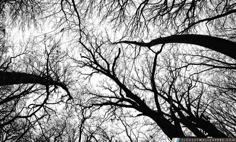 Pecan Grove En Noir Et Blanc Fond Décran Hd à Télécharger