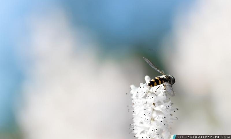 C'est une abeille, Arrière-plans HD à télécharger