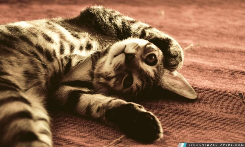 Drôle de chat. Fond d'écran HD à télécharger | Elegant Wallpapers
