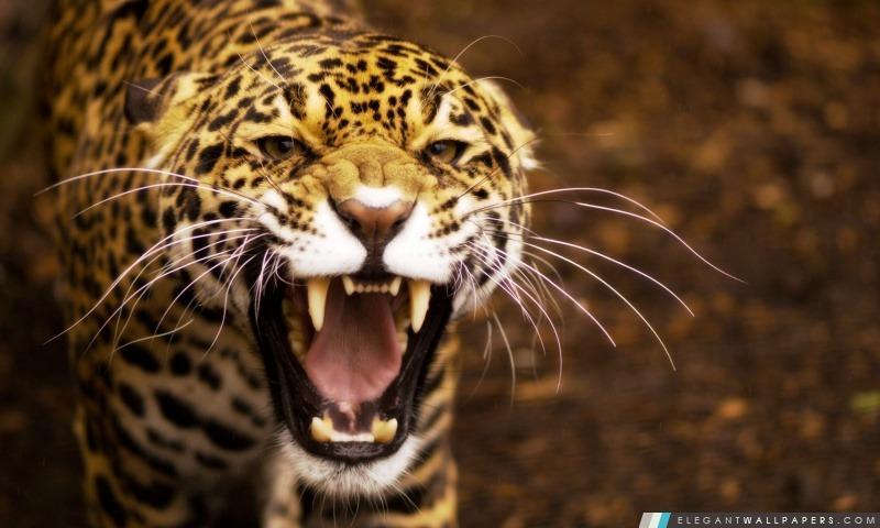 Jaguar, Arrière-plans HD à télécharger