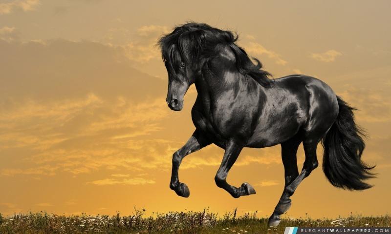 Black Horse du film, Arrière-plans HD à télécharger