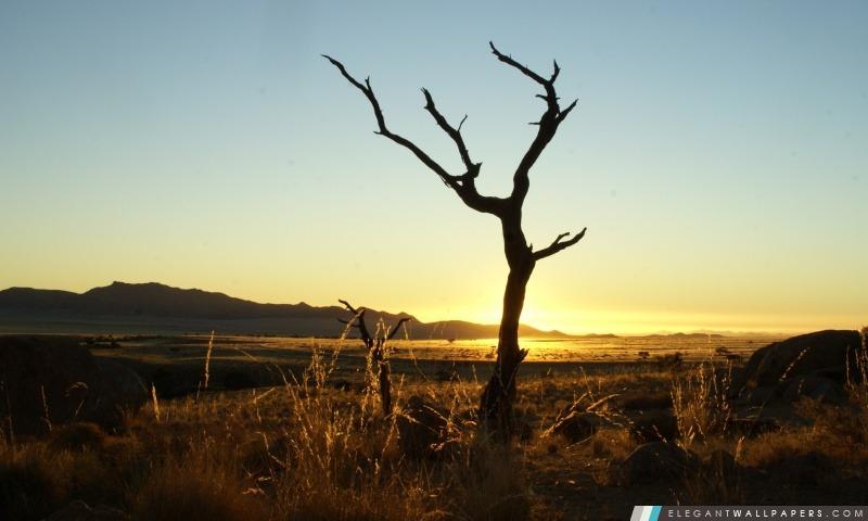 Coucher de soleil, désert de Namib, Arrière-plans HD à télécharger
