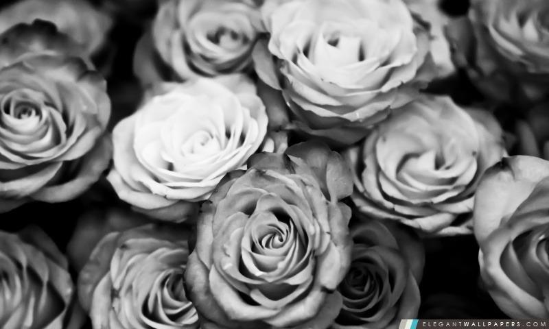 Roses En Noir Et Blanc Fond D Ecran Hd A Telecharger