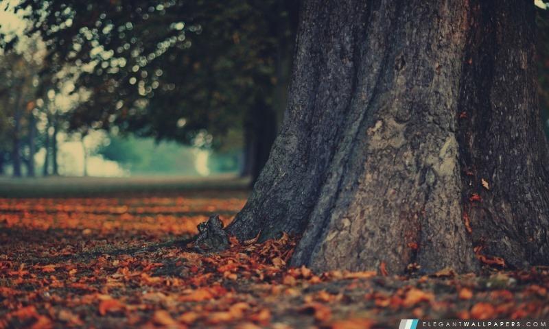 tronc d u0026 39 arbre  fond d u0026 39  u00e9cran hd  u00e0 t u00e9l u00e9charger
