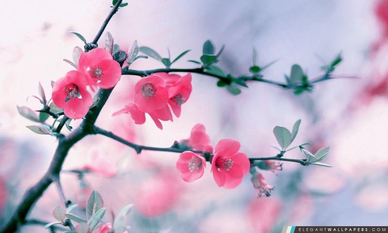 Fleur Rose Fleurs Printemps Fond D Ecran Hd A Telecharger