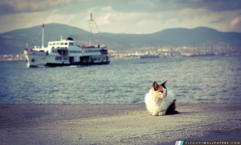 Chat et le navire, Arrière-plans HD à télécharger