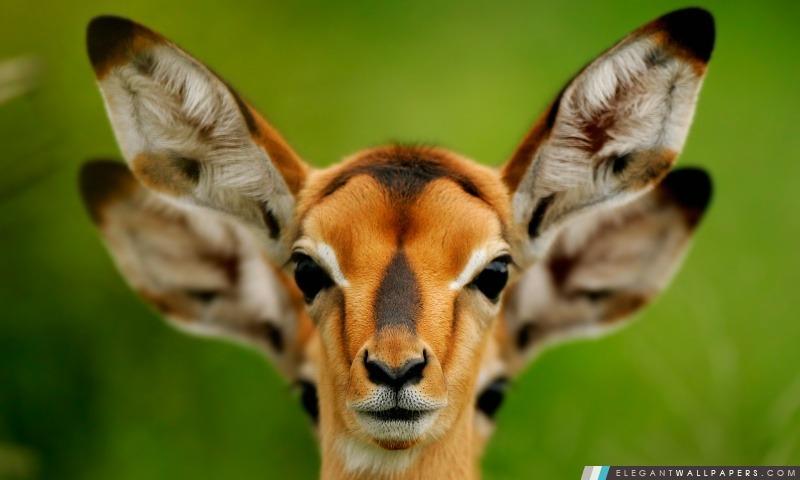 Animaux sauvages, Arrière-plans HD à télécharger