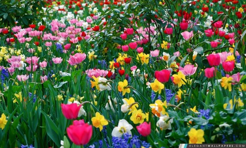 Fleurs de printemps, Arrière-plans HD à télécharger