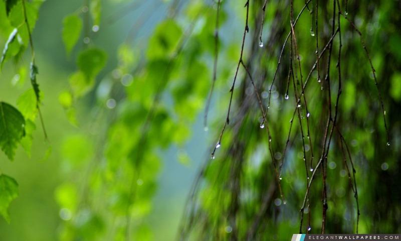 Wet Rameaux, été, Arrière-plans HD à télécharger