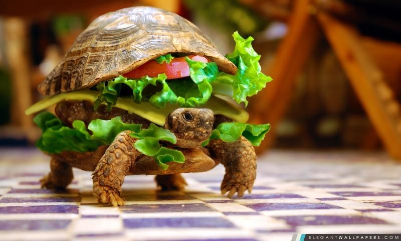 Cheese Burger tortue par K23, Arrière-plans HD à télécharger
