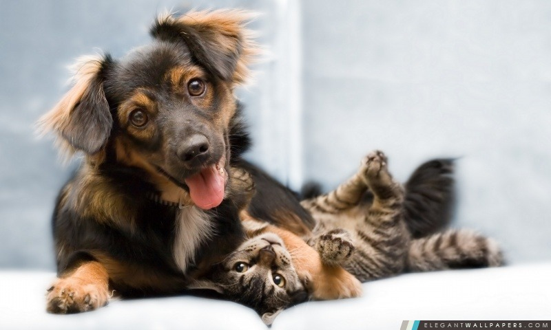 Chien et chat Amitié. Fond d'écran HD à télécharger | Elegant Wallpapers