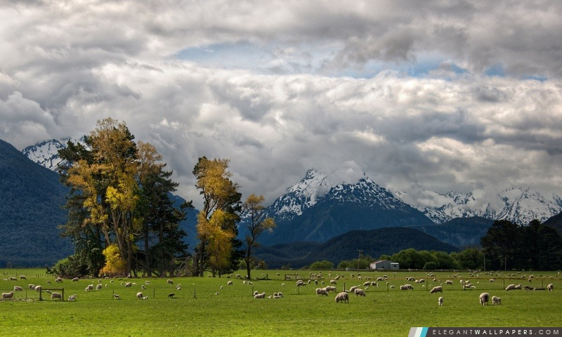 Moutons sur le chemin vers le paradis, Arrière-plans HD à télécharger