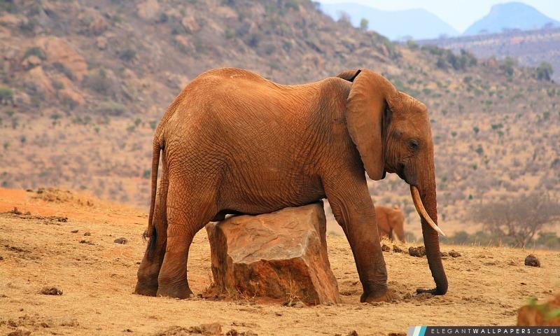 Terre d'éléphant, Arrière-plans HD à télécharger