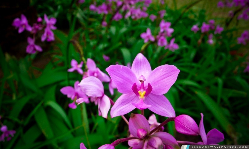 Orchidee Fond D Ecran Hd A Telecharger Elegant Wallpapers