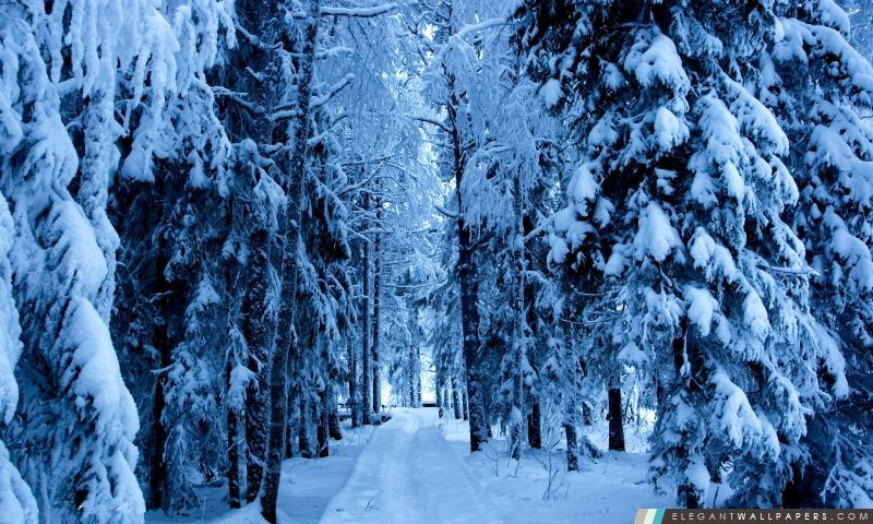 Sentiers de forêt dans la neige, Arrière-plans HD à télécharger