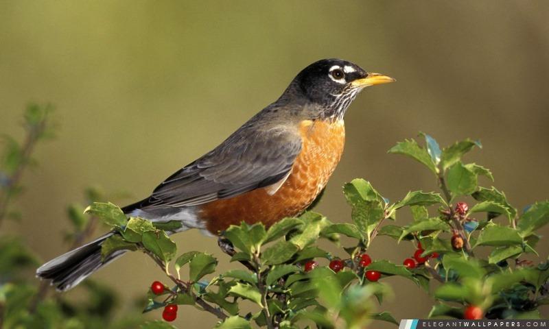 foto de Direction Oiseaux Oiseau sur Fond d'écran HD à