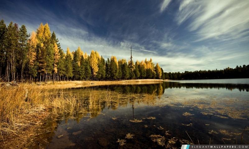 foto de Forêt par le lac Fond d'écran HD à télécharger Elegant