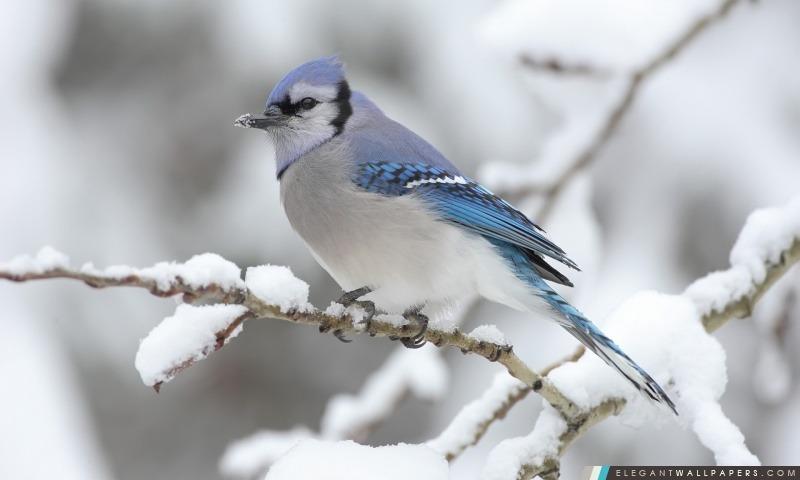 Bel Oiseau D Hiver Fond D Ecran Hd A Telecharger Elegant