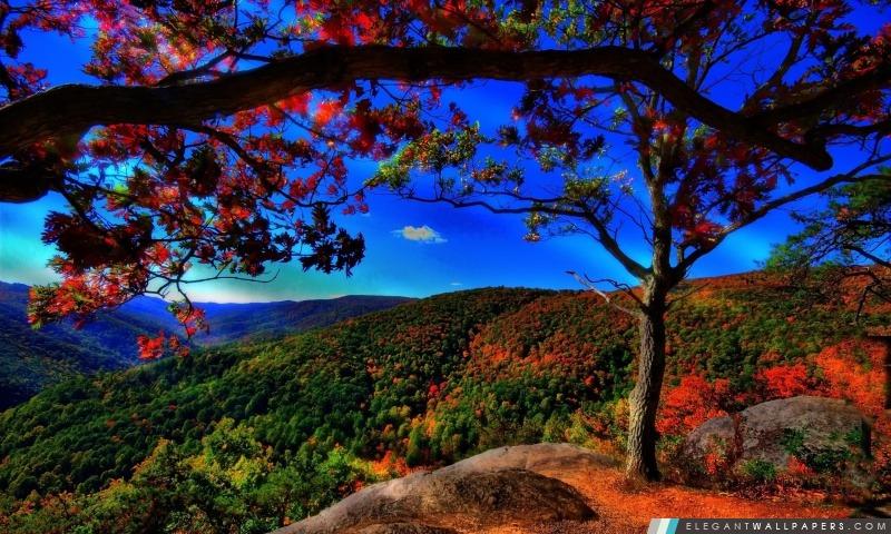 foto de Paysage d'automne Forêt Fond d'écran HD à télécharger