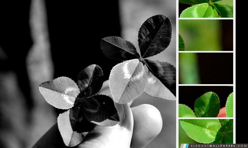Trèfles à quatre feuilles, Arrière-plans HD à télécharger