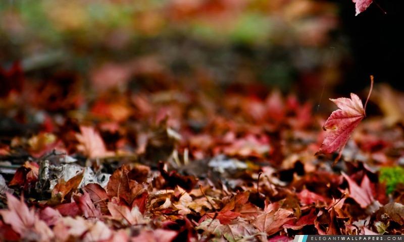 Autumn Again, Arrière-plans HD à télécharger