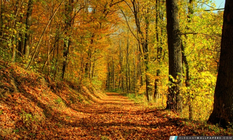 Promenade d'automne, Arrière-plans HD à télécharger