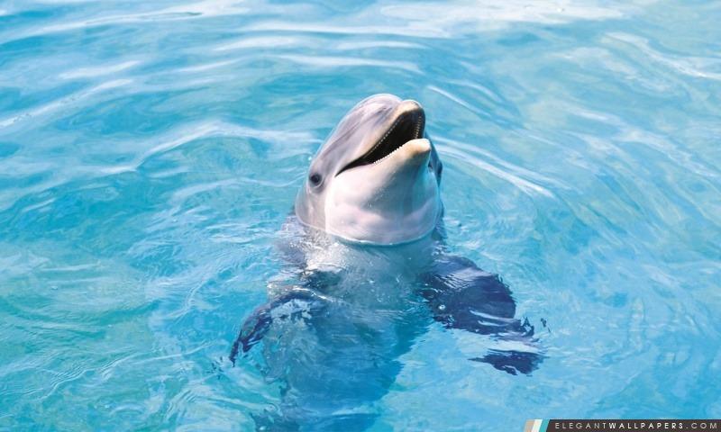 Dolphin HD, Arrière-plans HD à télécharger